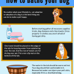 How_to_bathe_your_dog